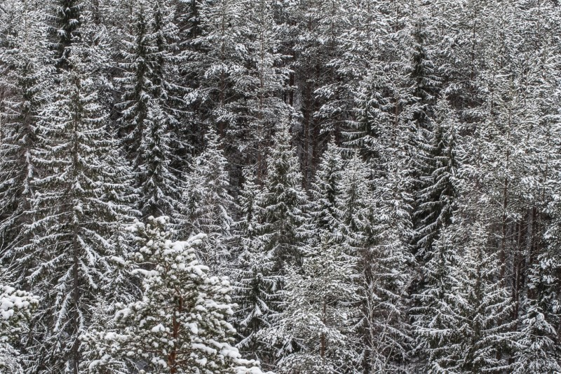 Film production locations in Finland, snowy forest in winter by Tommi Hynynen.